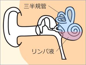三半規管とリンパ液のイメージ図